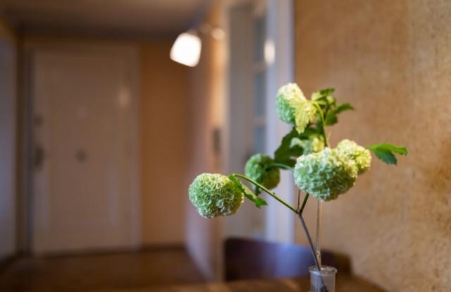 kvetina lampa zidle vaza dvere